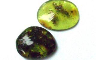 Зеленый янтарь – природный хвойный камень