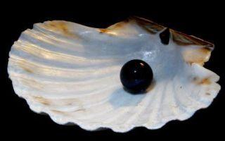 Черный жемчуг – камень морских глубин