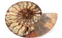 Аммонит – древний камень благополучия