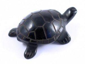 черепаха_гагат